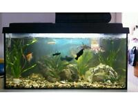Tropical Tank - Turtles & fish complete set up