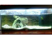 Jewel 180l fish tank aquarium
