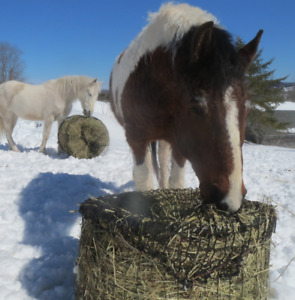 Made to order Tumble Feeders at Equine Review