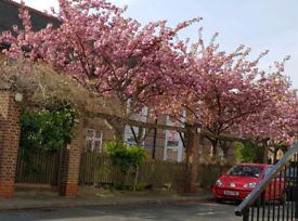 1 bed islington ground floor flat for your 2 bed with a garden