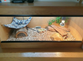 Premium Solid Beech Vivarium for sale °Brand New°