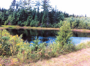 LARGE POND, 116 ACRES, PERFECT FOR A CAMP