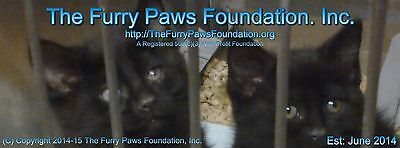 The Furry Paws Foundation, Inc.