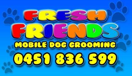 Fresh Friends Newton Campbelltown Area Preview