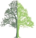 Perrie Hale Trees & Shrubs
