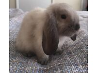 Baby bunnies needing forever home