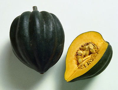 Squash Seed: Table Queen Acorn Seeds Fresh Seed  FREE Shipping!