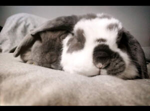Bunnies- FREE to loving home!
