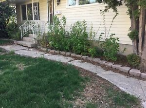 Need front sidewalk removed and replaced