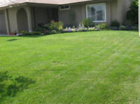 Inexpensive Grass Cutting Services !
