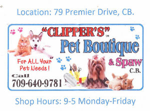 Clippers Pet Grooming