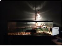 Yellow Bellied Water Turtle, Tank and accessories.
