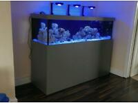 Marine fish tank saltwater coral tank big tank