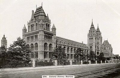 United Kingdom London Londres Natural History Museum Old Photo (Londres Natural)