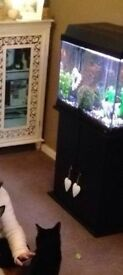 Full functioning tropical fish tank for sale complete with cabinet stand.