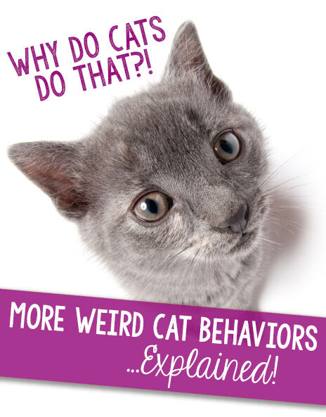 Why Do Cats Do That?! More Weird Cat Behaviors…Explained