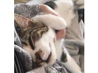 Help - our tabby and white cat Dennis is missing from E17