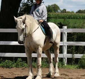 Need your horses exercised??