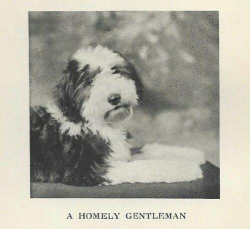 "* Old Englsih Sheepdog Puppy ""P"" - 1931 Dog Art Print - Matted"
