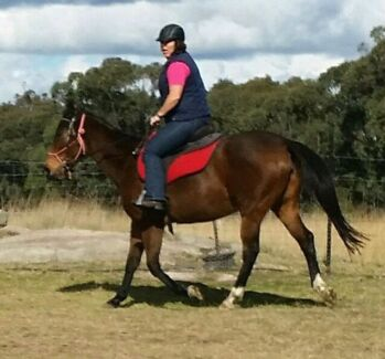 Quiet TB mare Stanthorpe Southern Downs Preview