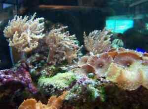 Professional Aquarium Cleaning Edmonton Edmonton Area image 5