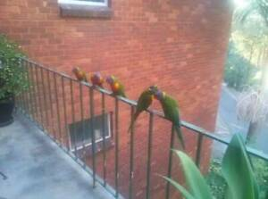 Lane Cove North. Artarmon. Furnished Room $270 PW includes electricity