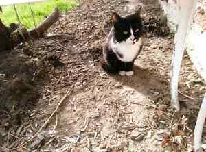 Black and white female cat spayed, about 2 yrs old.