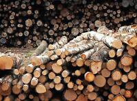 Tree Length FIREWOOD