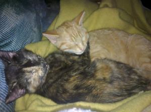 Furbabies in need of a safe and happy home