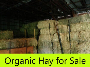Organic Hay for Sale!