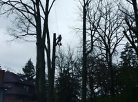RELIABLE & AFFORDABLE TREE SERVICES