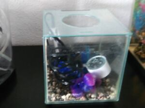 Betta Tank with Accessories