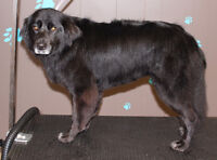 Dog Grooming in Hague
