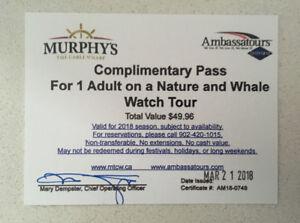 Whale Watching Tour Halifax