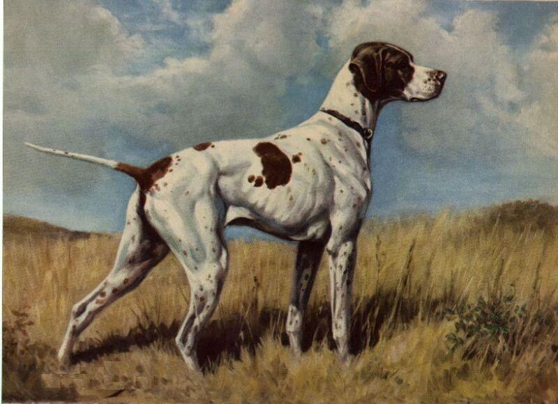 Pointer - Dog Art Print - Megargee MATTED