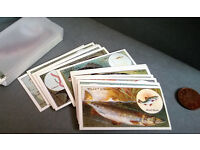 wills cigarette cards fish and bait