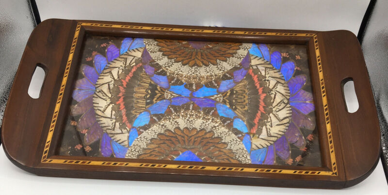 Antique Iridescent Blue Butterfly Wing Tray Decor Wood Inlaid Border  18.5 X 11