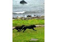 Dog Walking service in Larne.