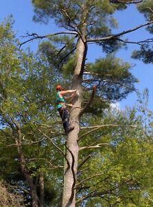 Highly skilled arborists Cambridge Kitchener Area image 6