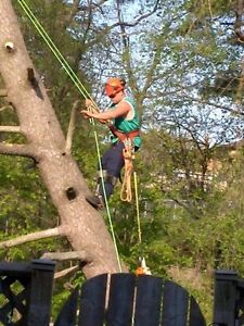 Tree removals, storm clean up , pruning, and felling of trees Cambridge Kitchener Area image 2