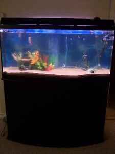 66Gal Bow-Front Aqaurium Tank with Glass-door Stand