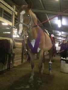 Equine First Aid Course In Clifford Ont Sat Oct 1 Stratford Kitchener Area image 6