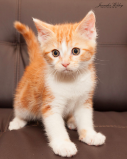 Neo rescue kITTEN to adopt VET WORK INCLUDED