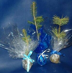 Tree Seedlings for Weddings, Earth Day, Birthdays, Promotions Downtown-West End Greater Vancouver Area image 8