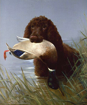 IRISH WATER SPANIEL IWS DOG ART PRINT - Duck Shooting - by Lilian Cheviot