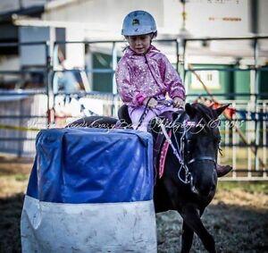 Horse pony Shetland Singleton Singleton Area Preview