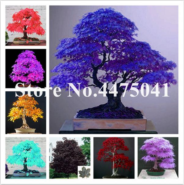 50 PCS Seeds Mix Dieffenbachia Bonsai Money Tree Plants Rare Perennial 2019 New
