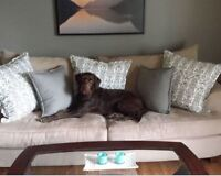 F1 First Gen Chocolate Labradoodle - New home found