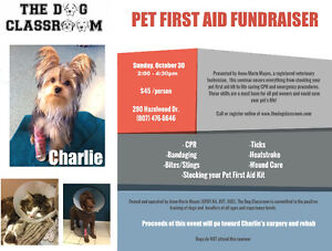 Pet First Aid Fundraiser at The Dog Classroom
