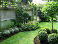 Landscaping/yard maintenance